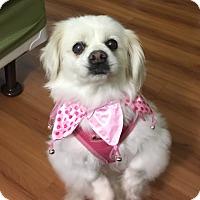 Adopt A Pet :: Annabelle - SO CALIF, CA