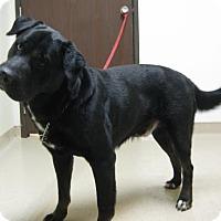 Adopt A Pet :: Blu - Gary, IN