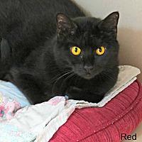 Adopt A Pet :: Red - tama, IA