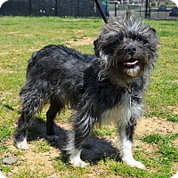 Adopt A Pet :: *Brigitta - PENDING - Westport, CT
