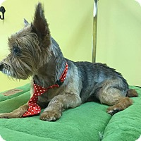 Adopt A Pet :: Diego - Knoxville, TN