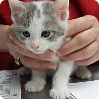 Adopt A Pet :: Jimmy - Paducah, KY
