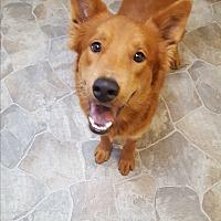Adopt A Pet :: Sven - Fennville, MI