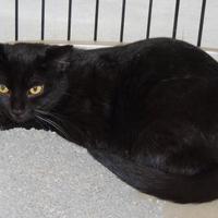 Adopt A Pet :: Claudia - Westville, IN