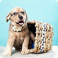 Adopt A Pet :: Mai Tai - Houston, TX