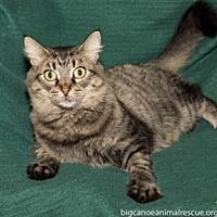 Adopt A Pet :: Molly - Big Canoe, GA