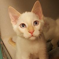 Adopt A Pet :: Vermont - Grayslake, IL
