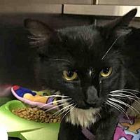 Adopt A Pet :: DEARDON - Ames, IA