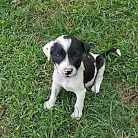 Adopt A Pet :: Meg-LW_2017 - Virginia Beach, VA