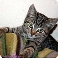 Adopt A Pet :: Rico - Canoga Park, CA