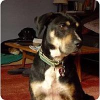 Adopt A Pet :: Josie - Seattle, WA