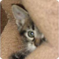 Adopt A Pet :: Little Man - Richfield, OH