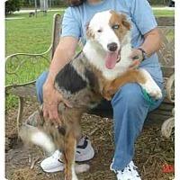 Adopt A Pet :: Monica - Orlando, FL