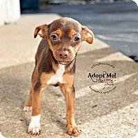 Adopt A Pet :: Heineken - Shawnee Mission, KS