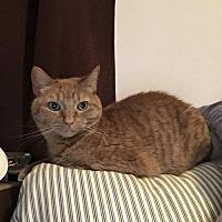 Adopt A Pet :: Mia (Courtesy Listing) - Hampton, VA