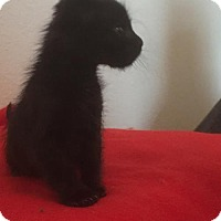 Adopt A Pet :: Kaylee 436046 - San Antonio, TX