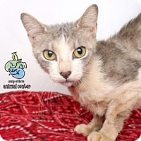 Domestic Shorthair Cat for adoption in Knoxville, Tennessee - Suzie