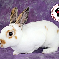 Adopt A Pet :: O'Neill - Wilmington, NC