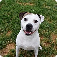 Adopt A Pet :: Harvey - Steger, IL