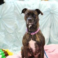 Adopt A Pet :: Mixie - Charleston, SC