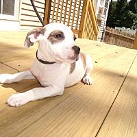 Adopt A Pet :: ShaniA - LAKEVILLE, MA