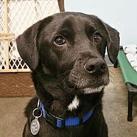 Adopt A Pet :: Jesse - New York, NY