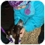 Photo 2 - Beagle/Pointer Mix Dog for adoption in Chicago, Illinois - Tilly