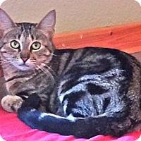 Adopt A Pet :: Gweyn - Escondido, CA