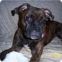 Adopt A Pet :: Madeline - Albany, GA