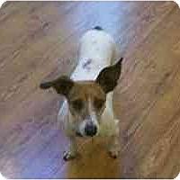 Adopt A Pet :: Bunny - Omaha, NE