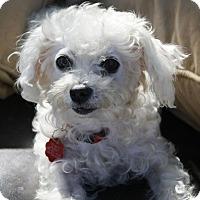 Adopt A Pet :: TASSELL~SendMeSomebody2Love - Encino, CA