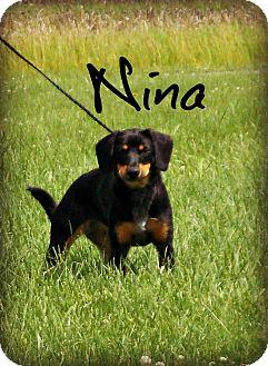 Beagle Mix Dog for adoption in Defiance, Ohio - Nina