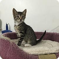 Adopt A Pet :: Vince - Speonk, NY