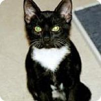 Adopt A Pet :: PJ - Stafford, VA