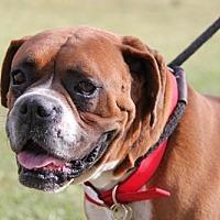 Adopt A Pet :: Kolton - Phoenix, AZ