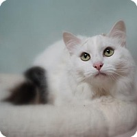 Adopt A Pet :: Lily (C17-110) - Lebanon, TN