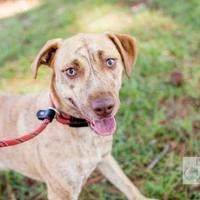 Adopt A Pet :: Lucky - Myrtle Beach, SC