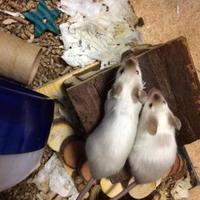 Adopt A Pet :: Crackle - Edmonton, AB