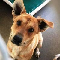 Adopt A Pet :: Marco - Denver, CO
