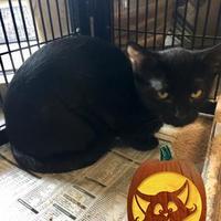 Adopt A Pet :: Heath - DeKalb, IL