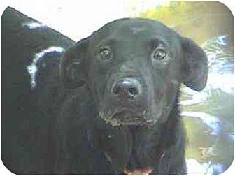 Labrador Retriever Mix Dog for adoption in Tyler, Texas - TG-Daisy