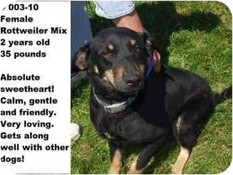 Rottweiler Mix Dog for adoption in Zanesville, Ohio - # 003-10 - ADOPTED!