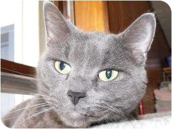 Domestic Shorthair Cat for adoption in Byron Center, Michigan - Bit Bit