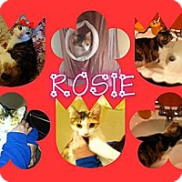 Adopt A Pet :: Rosie - Washington, DC