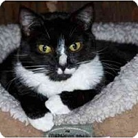 Adopt A Pet :: Ginny Weasley - Secaucus, NJ