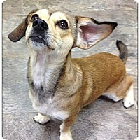 Adopt A Pet :: Gracie - Charlotte, NC
