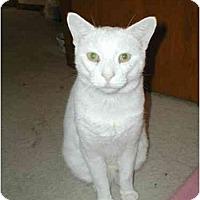 Adopt A Pet :: Jesse - Toronto, ON