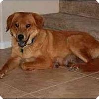 Adopt A Pet :: ZOEY - Gilbert, AZ