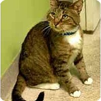 Adopt A Pet :: Alvin - Marietta, GA