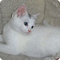 Adopt A Pet :: Angel - Richmond, VA